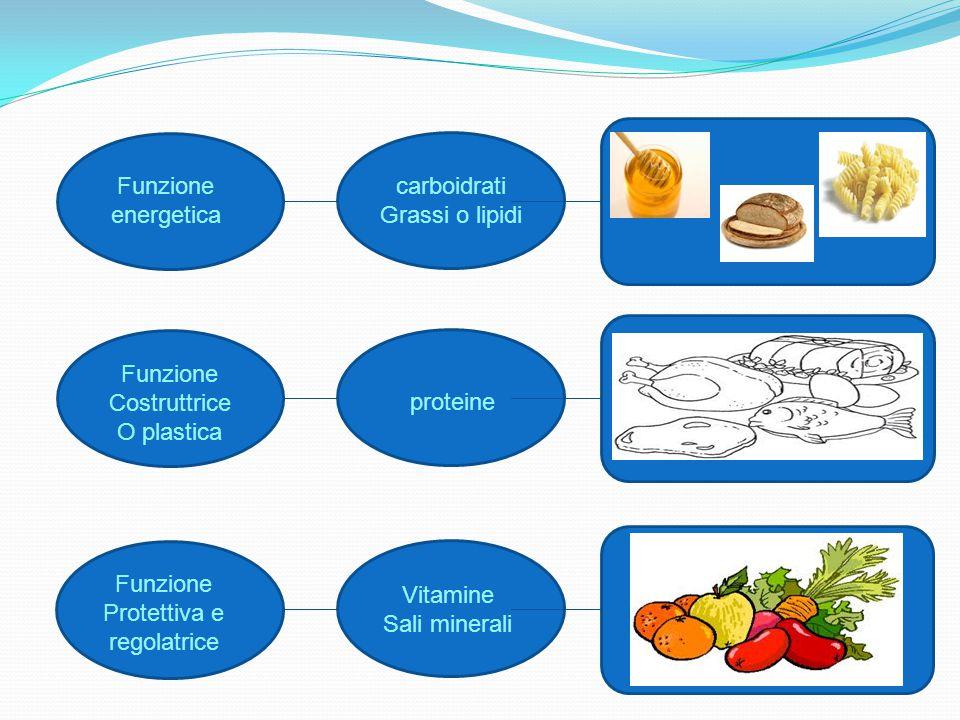 Il cibo, contiene le sostanze nutritive necessarie per crescere e stare in salute.