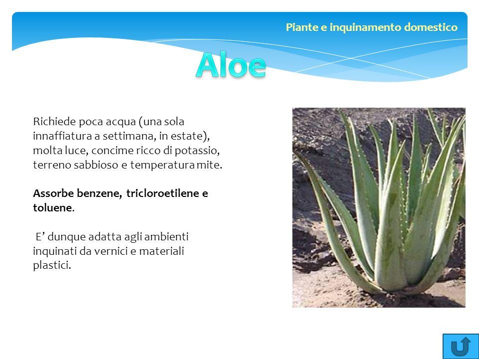 Richiede poca acqua (una sola innaffiatura a settimana, in estate), molta luce, concime ricco di potassio, terreno sabbioso e temperatura mite. Assorb