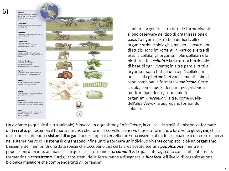è 6) L'unitarietà generale tra tutte le forme viventi si può osservare nel tipo di organizzazione di base. La figura illustra ben undici livelli di or