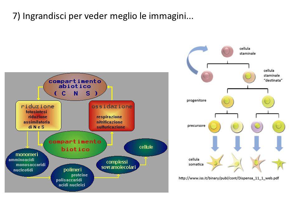8) p Gli organismi pluricellulari (o multicellulari) sono organismi costituiti di più di una cellula e aventi cellule differenziate che svolgono funzioni specializzate.