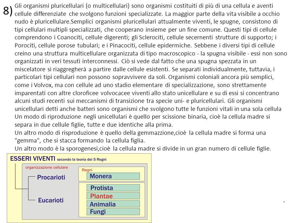 8) p Gli organismi pluricellulari (o multicellulari) sono organismi costituiti di più di una cellula e aventi cellule differenziate che svolgono funzi