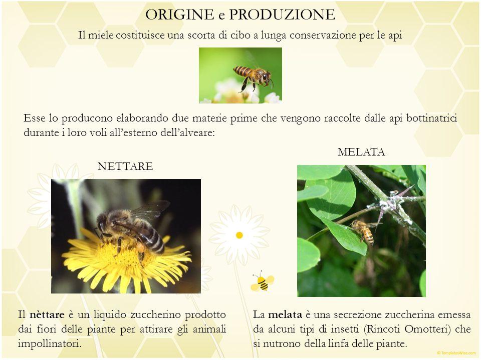 ORIGINE e PRODUZIONE Il miele costituisce una scorta di cibo a lunga conservazione per le api Esse lo producono elaborando due materie prime che vengo