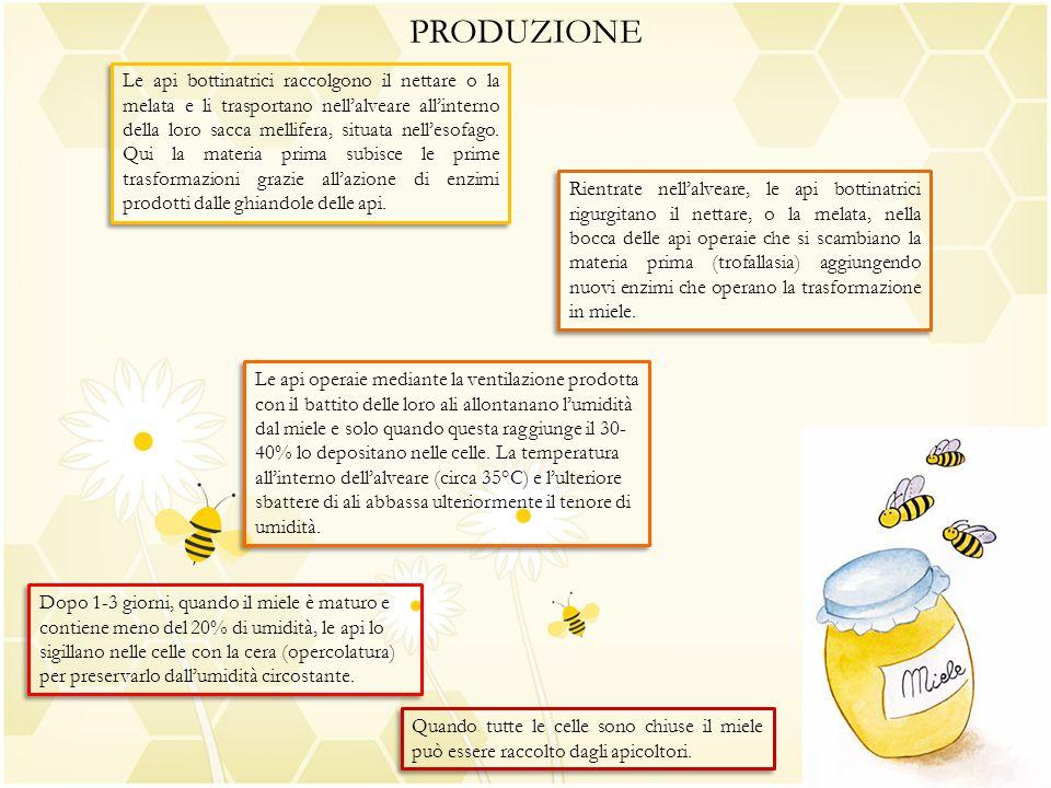 PRODUZIONE Le api bottinatrici raccolgono il nettare o la melata e li trasportano nell'alveare all'interno della loro sacca mellifera, situata nell'es