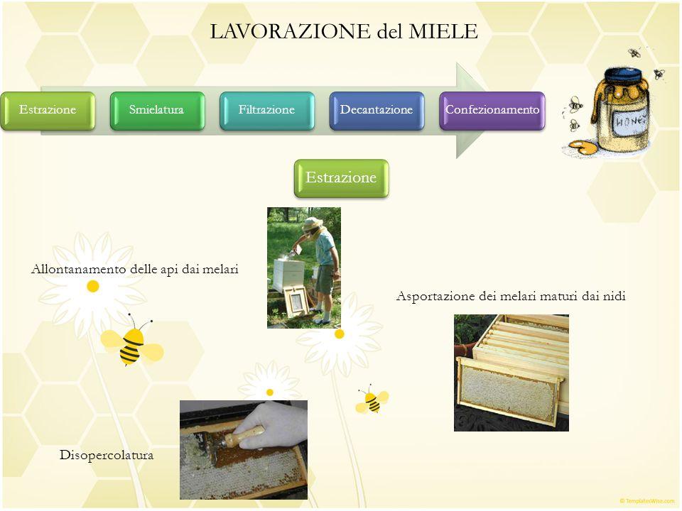 LAVORAZIONE del MIELE EstrazioneSmielaturaFiltrazioneDecantazioneConfezionamento Estrazione Allontanamento delle api dai melari Asportazione dei melar