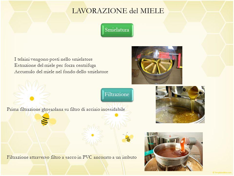 Smielatura LAVORAZIONE del MIELE I telaini vengono posti nello smielatore Estrazione del miele per forza centrifuga Accumulo del miele nel fondo dello