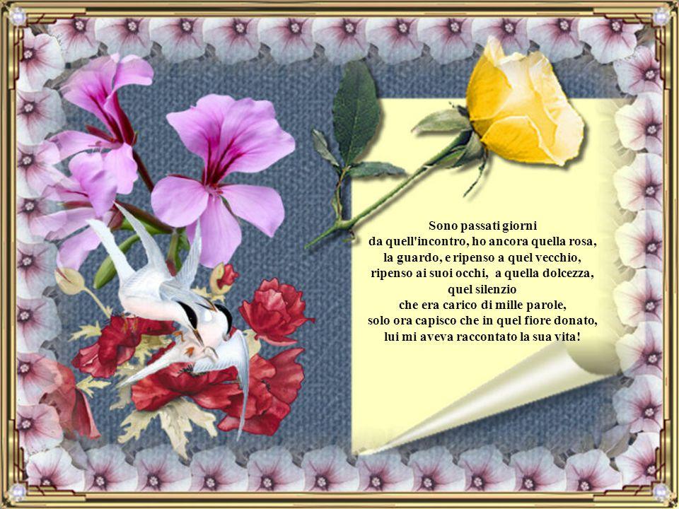 Quelle parole, riecheggiano nelle mie orecchie, guardo il fiore che mi aveva donato, una rosa rossa, una rosa che aveva perso il suo splendore ma non
