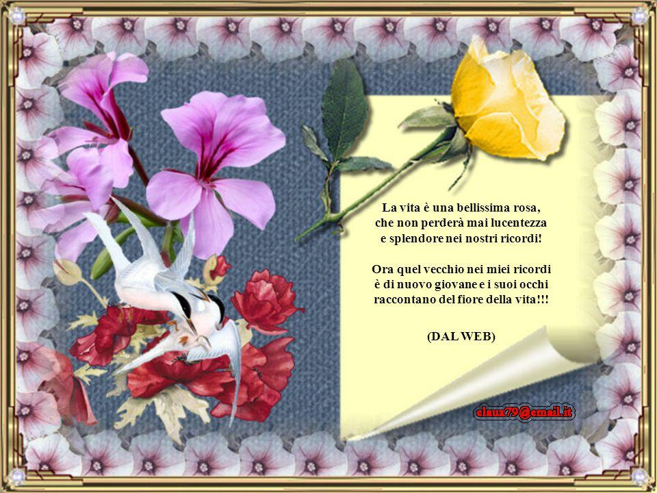 Sono passati giorni da quell'incontro, ho ancora quella rosa, la guardo, e ripenso a quel vecchio, ripenso ai suoi occhi, a quella dolcezza, quel sile
