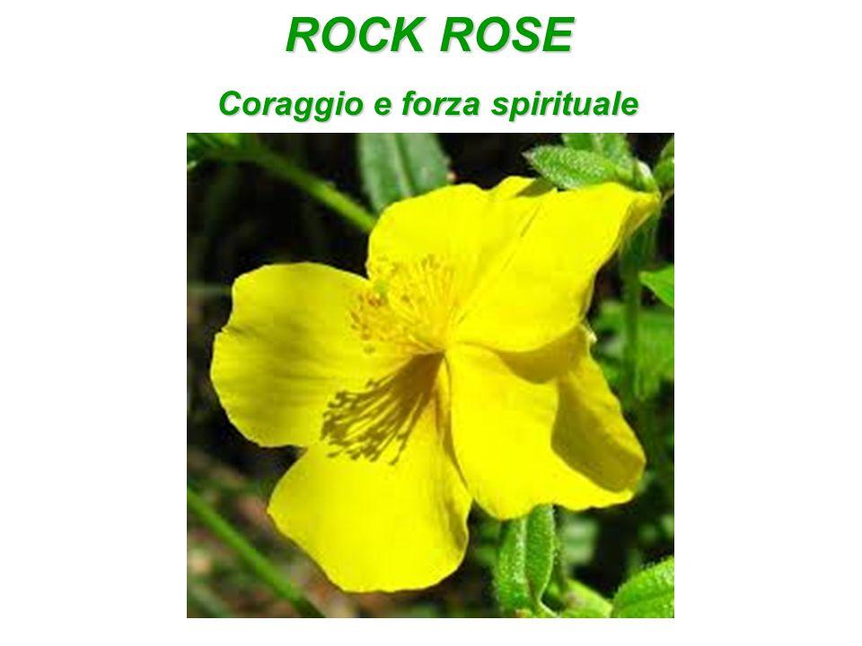 ROCK ROSE Coraggio e forza spirituale