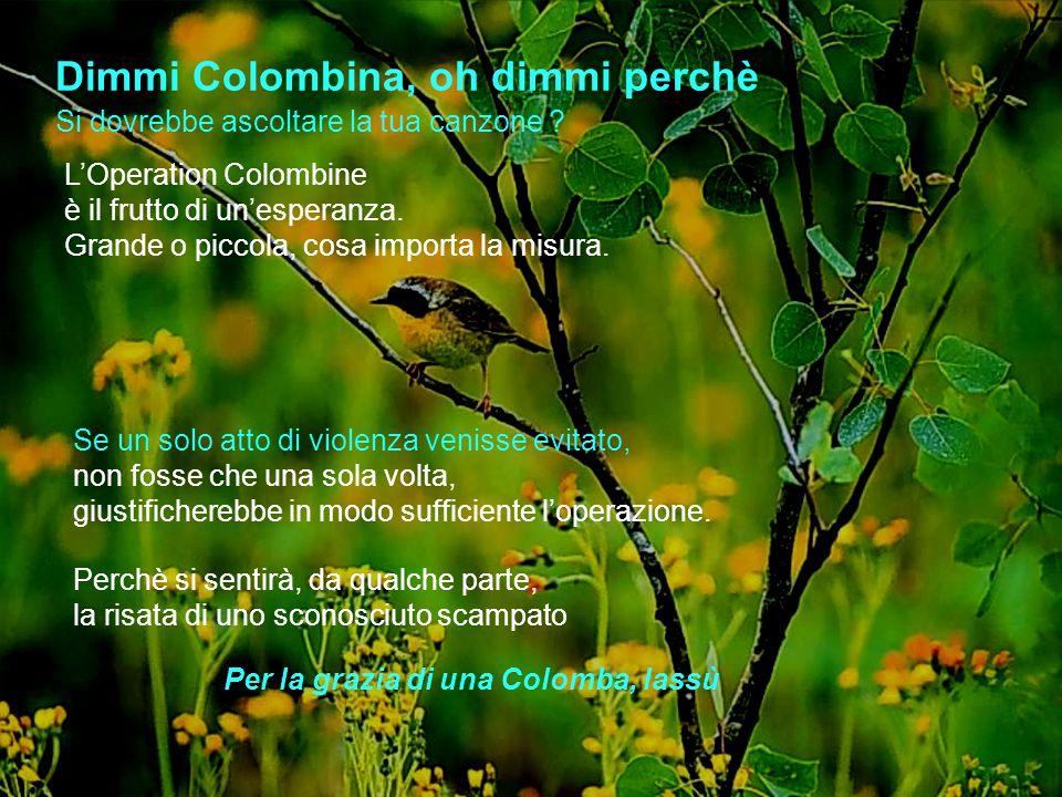 Dimmi Colombina, oh dimmi perchè L'Operation Colombine è il frutto di un'esperanza.