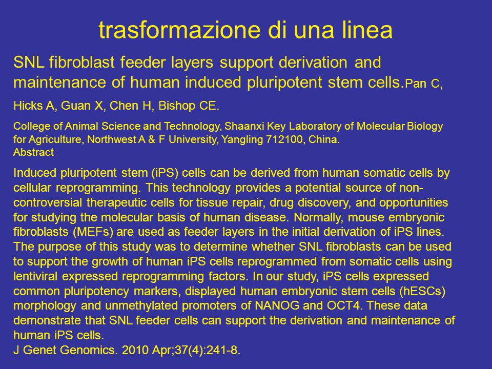 trasformazione di una linea SNL fibroblast feeder layers support derivation and maintenance of human induced pluripotent stem cells. Pan C, Hicks A, G