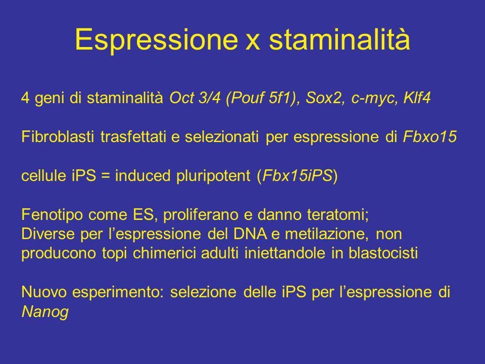 Espressione x staminalità 4 geni di staminalità Oct 3/4 (Pouf 5f1), Sox2, c-myc, Klf4 Fibroblasti trasfettati e selezionati per espressione di Fbxo15 cellule iPS = induced pluripotent (Fbx15iPS) Fenotipo come ES, proliferano e danno teratomi; Diverse per l'espressione del DNA e metilazione, non producono topi chimerici adulti iniettandole in blastocisti Nuovo esperimento: selezione delle iPS per l'espressione di Nanog