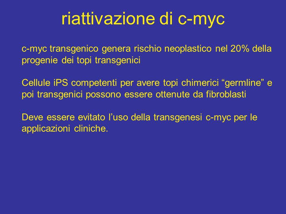 riattivazione di c-myc c-myc transgenico genera rischio neoplastico nel 20% della progenie dei topi transgenici Cellule iPS competenti per avere topi chimerici germline e poi transgenici possono essere ottenute da fibroblasti Deve essere evitato l'uso della transgenesi c-myc per le applicazioni cliniche.