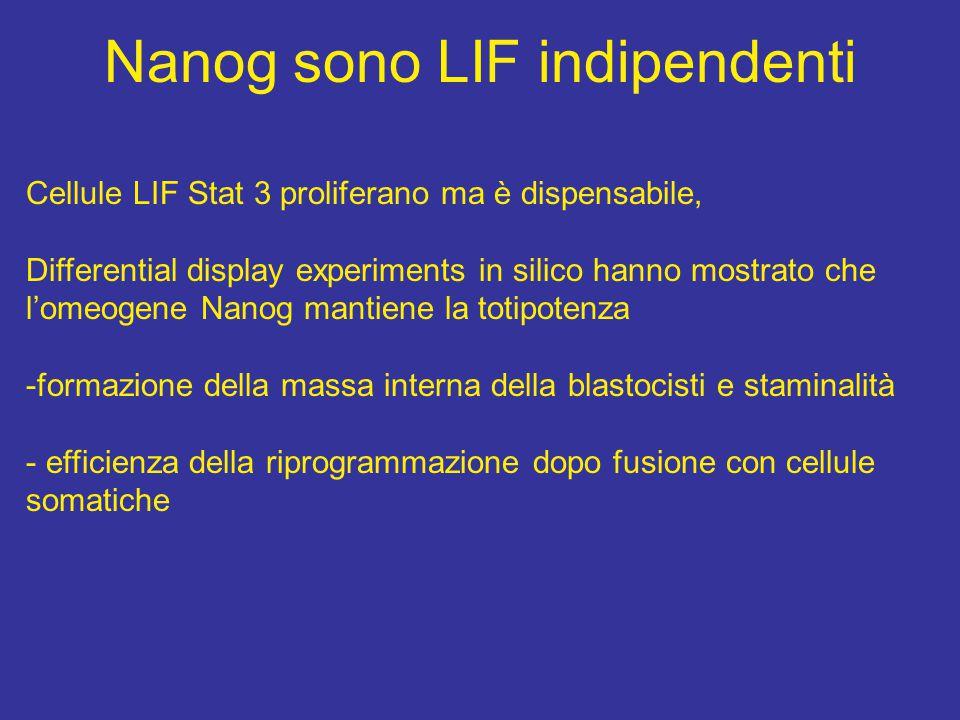 Nanog promotes transfer of pluripotency after cell fusion Nature 2006 Jun 22;441:997-1001 Silva J, Chambers I, Pollard S, Smith A.