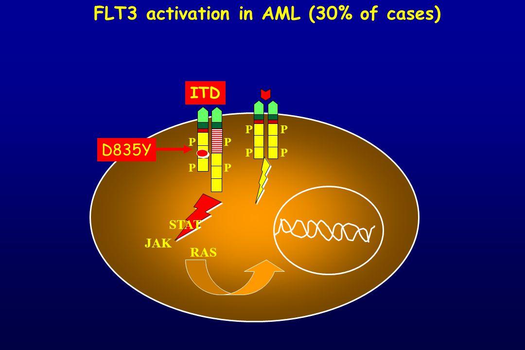 JAK RAS P P P P FLT3 activation in AML (30% of cases) P P P P ITD STAT D835Y
