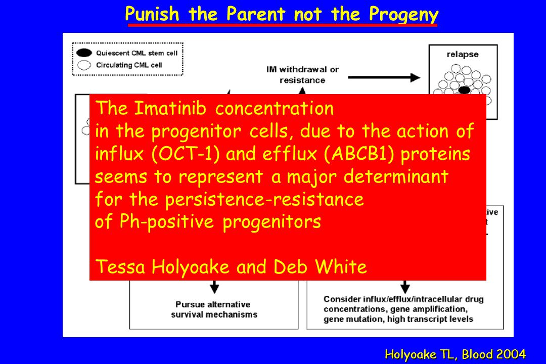Holyoake TL, Blood 2004 Punish the Parent not the Progeny Bcr-Abl off?Bcr-Abl on.