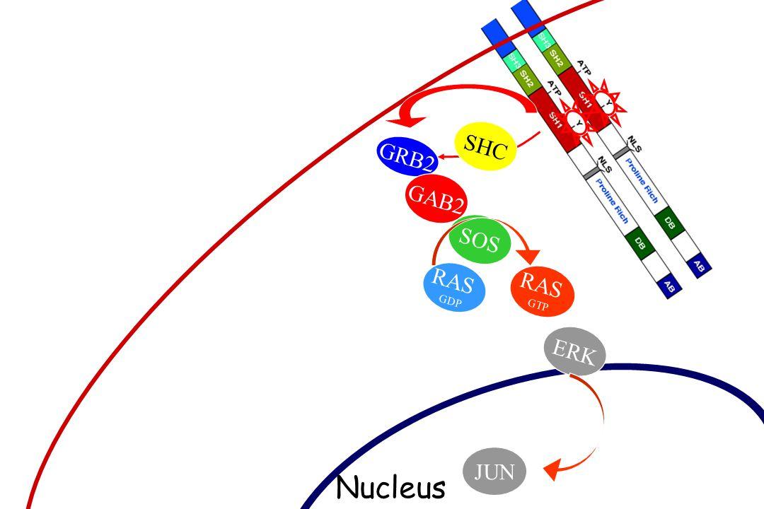 Gorre et al., Science. 2001 Wild-typeT3151 Mutant Wild-typeT3151 Mutant