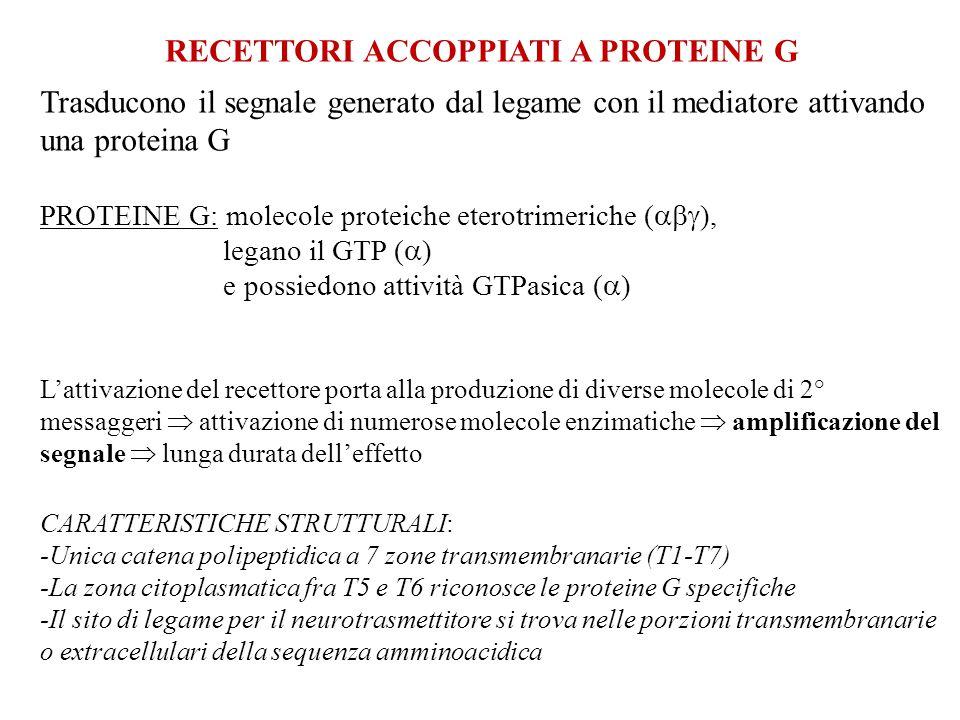 RECETTORI ACCOPPIATI A PROTEINE G Trasducono il segnale generato dal legame con il mediatore attivando una proteina G PROTEINE G: molecole proteiche e
