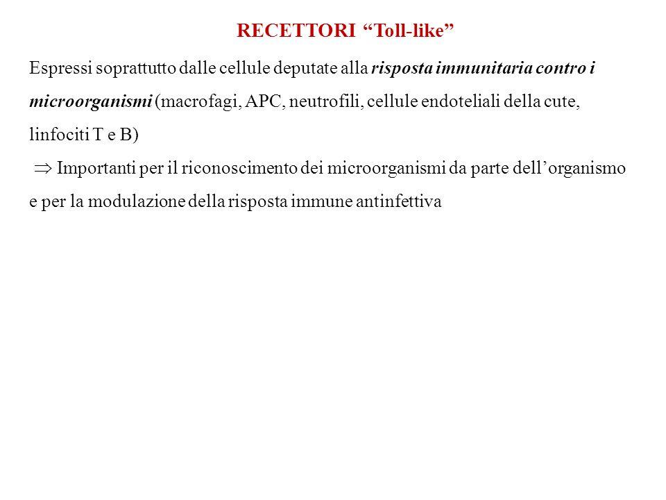 "RECETTORI ""Toll-like"" Espressi soprattutto dalle cellule deputate alla risposta immunitaria contro i microorganismi (macrofagi, APC, neutrofili, cellu"