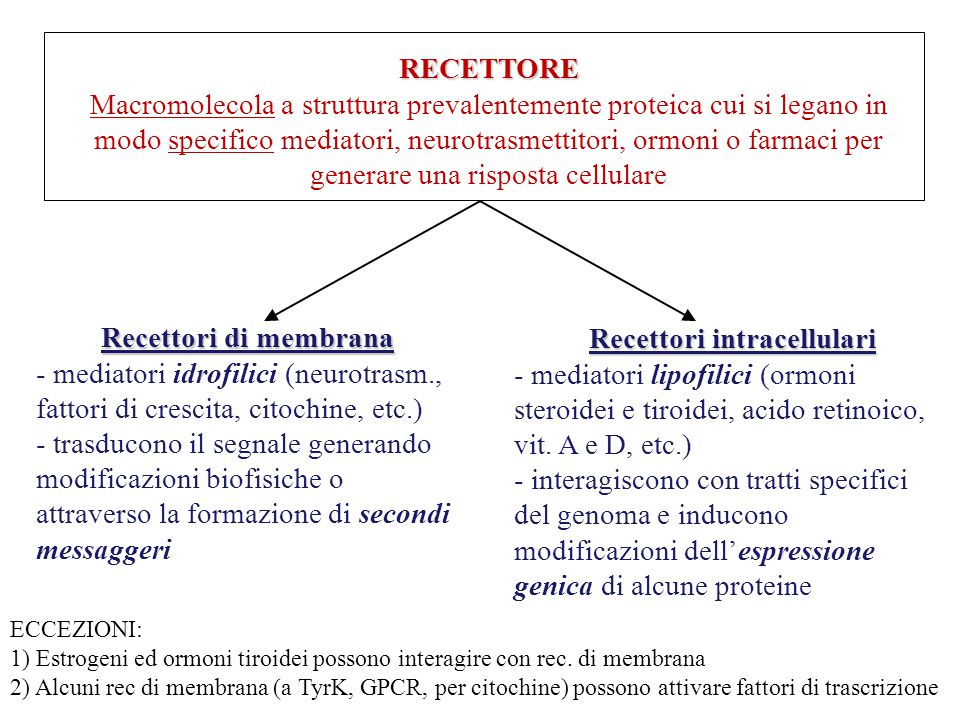 RECETTORI INTRACELLULARI Proteine citosolubili capaci di legare il DNA e di regolare la trascrizione di geni specifici LOCALIZZAZIONE: - nucleare (veicolati nel nucleo dopo la sintesi nel RE) - citoplasmatica (rec x mineral- e glucocorticoidi, progesterone e androgeni  attraversano la membrana nucleare solo se legati al proprio ligando) CARATTERISTICHE STRUTTURALI: - Singola catena polipeptidica → 3 territori: C-term: 12 α eliche (H1-H12) Sito di legame x l'ormone (cavità idrofobica delimitata da H3, H5 e H6) Regione centrale: ca.70aa, dominio maggiormente conservato, ricco di Cys che stabilizzano l'associazione con il DNA, legame con sequenze specifiche di DNA N-term: Sequenza poco conservata  essenziale x la specificità d'azione a livello di transattivazione (interazione e attivazione di fattori di trascrizione)