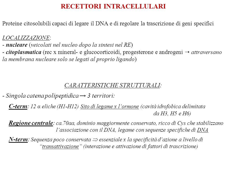 RECETTORI INTRACELLULARI Proteine citosolubili capaci di legare il DNA e di regolare la trascrizione di geni specifici LOCALIZZAZIONE: - nucleare (vei