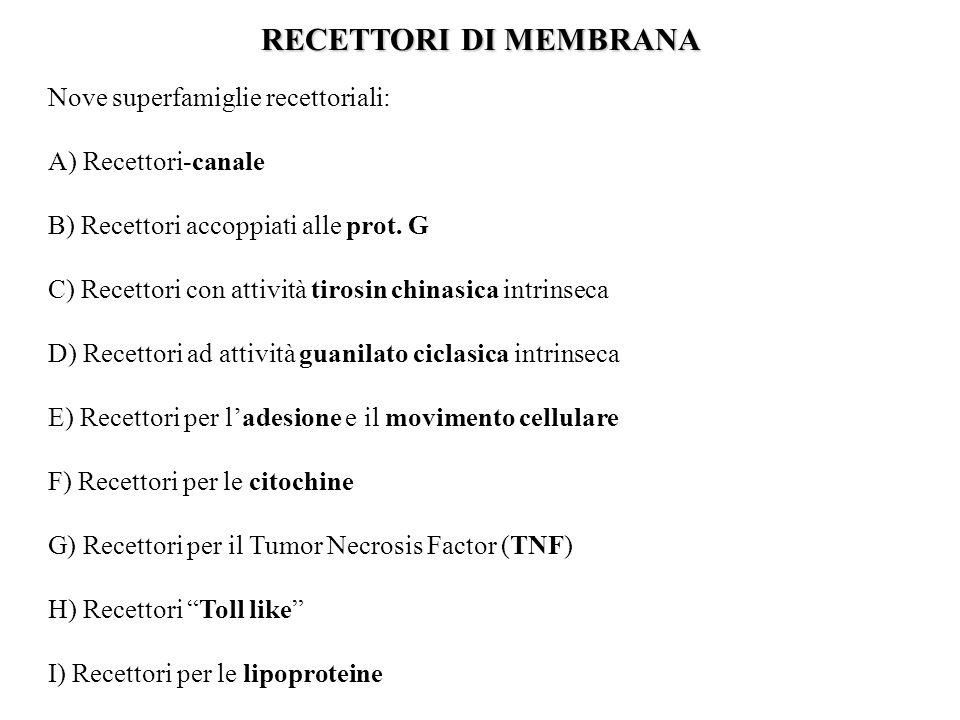 RECETTORI DI MEMBRANA Nove superfamiglie recettoriali: A) Recettori-canale B) Recettori accoppiati alle prot. G C) Recettori con attività tirosin chin