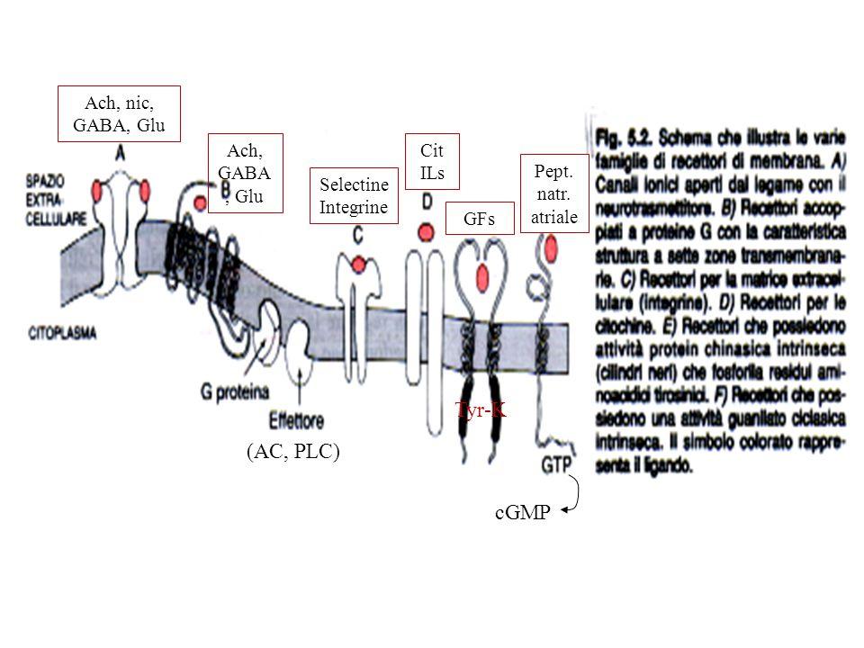 Ach, nic, GABA, Glu Ach, GABA, Glu Selectine Integrine Cit ILs GFs Pept. natr. atriale (AC, PLC) Tyr-K cGMP