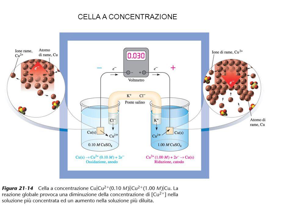 CELLA A CONCENTRAZIONE