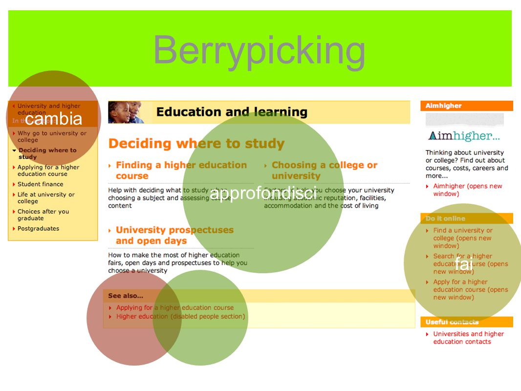 Berrypicking approfondisci fai cambia