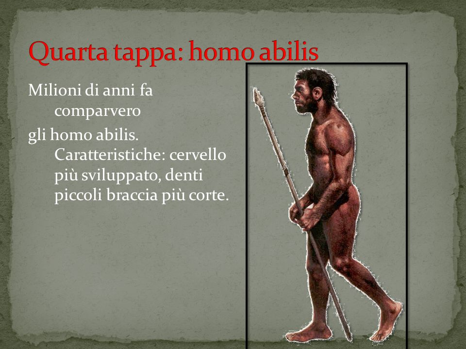 Milioni di anni fa comparvero gli homo abilis. Caratteristiche: cervello più sviluppato, denti piccoli braccia più corte.