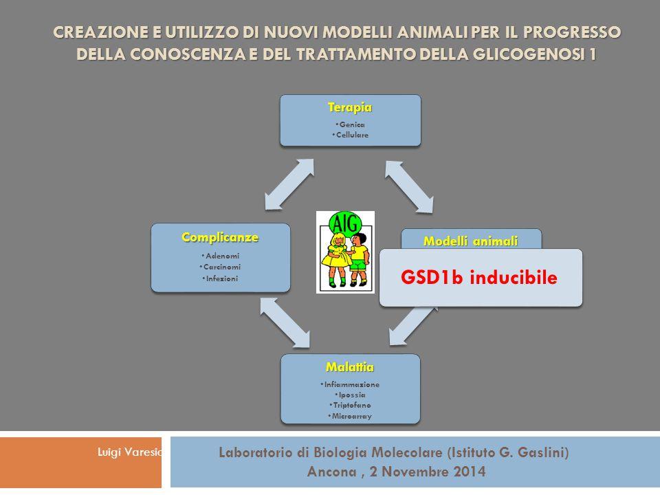 Terapia Genica Cellulare Modelli animali GSD1a totale GSD1a fegato GSD1b inducibile Malattia Infiammazione Ipossia Triptofano Microarray Complicanze A
