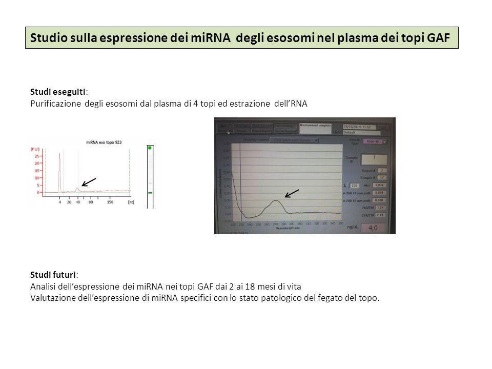 Studio sulla espressione dei miRNA degli esosomi nel plasma dei topi GAF Studi eseguiti: Purificazione degli esosomi dal plasma di 4 topi ed estrazion