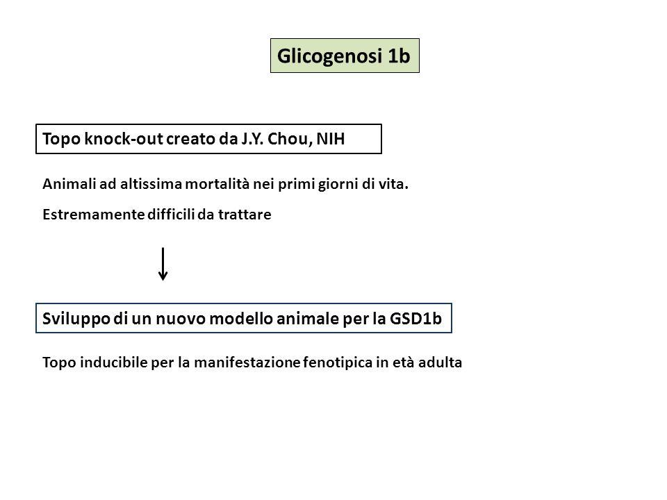Le complicanze della Glicogenosi 1a: dai topi agli esosomi Le complicanze della Glicogenosi 1a: dai topi agli esosomi Terapia Modelli animali Malattia Complicanze