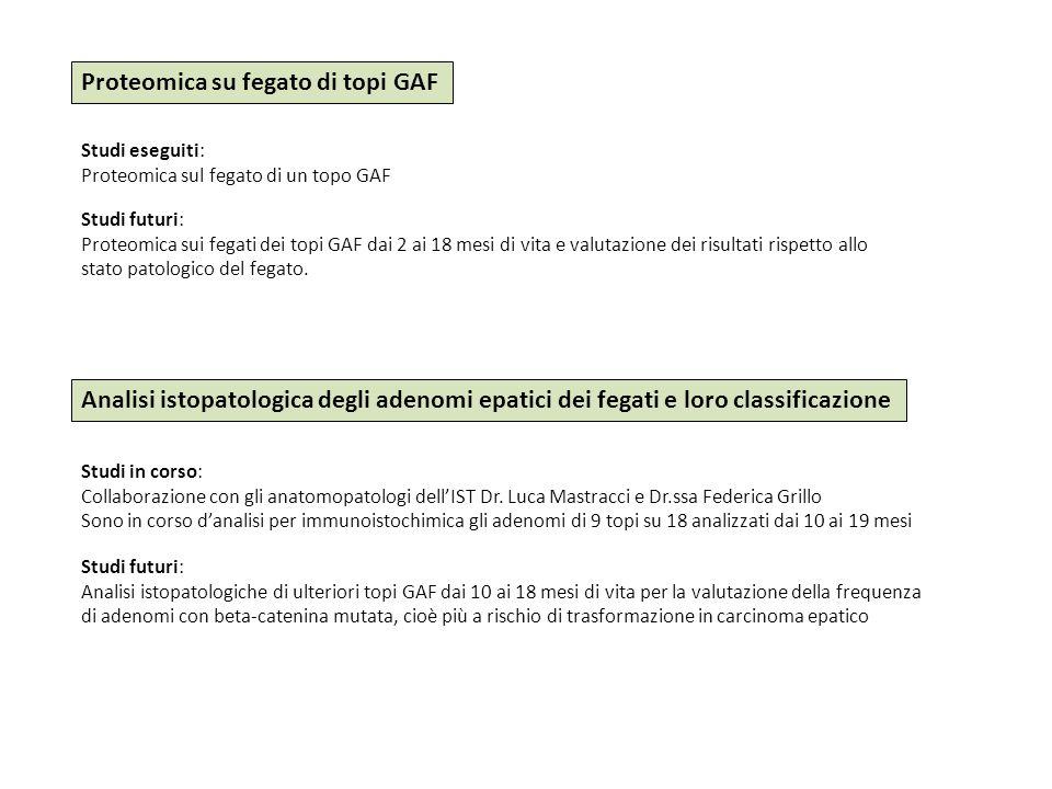 Proteomica su fegato di topi GAF Studi eseguiti: Proteomica sul fegato di un topo GAF Studi futuri: Proteomica sui fegati dei topi GAF dai 2 ai 18 mes