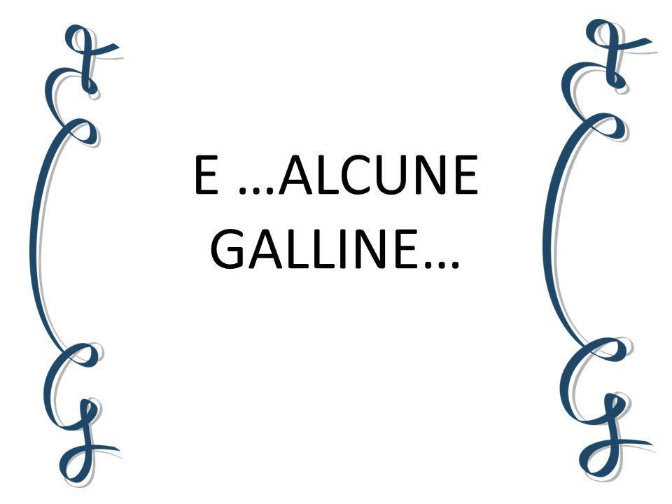 E …ALCUNE GALLINE…