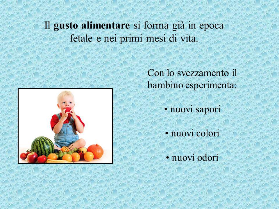 Il gusto alimentare si forma già in epoca fetale e nei primi mesi di vita. Con lo svezzamento il bambino esperimenta: nuovi sapori nuovi colori nuovi