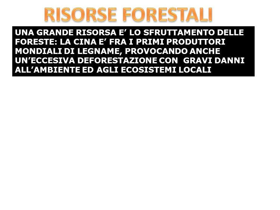 UNA GRANDE RISORSA E' LO SFRUTTAMENTO DELLE FORESTE: LA CINA E' FRA I PRIMI PRODUTTORI MONDIALI DI LEGNAME, PROVOCANDO ANCHE UN'ECCESIVA DEFORESTAZIONE CON GRAVI DANNI ALL'AMBIENTE ED AGLI ECOSISTEMI LOCALI
