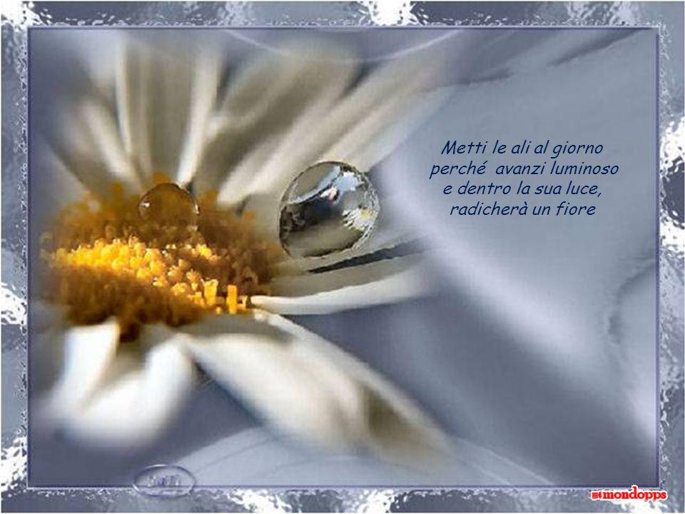 Metti le ali al giorno perché avanzi luminoso e dentro la sua luce, radicherà un fiore