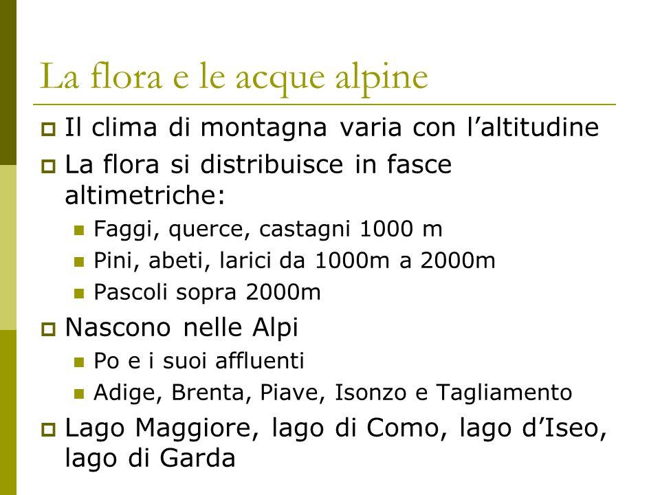 La flora e le acque alpine IIl clima di montagna varia con l'altitudine LLa flora si distribuisce in fasce altimetriche: Faggi, querce, castagni 1