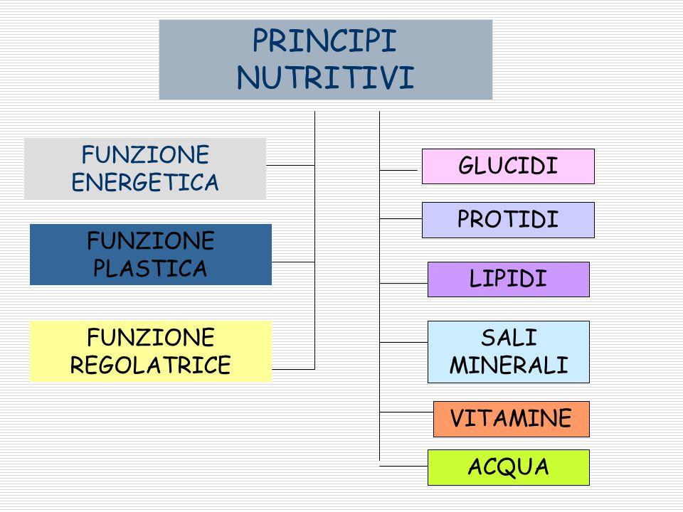PRINCIPI NUTRITIVI FUNZIONE ENERGETICA FUNZIONE PLASTICA FUNZIONE REGOLATRICE PROTIDI GLUCIDI LIPIDI SALI MINERALI VITAMINE ACQUA