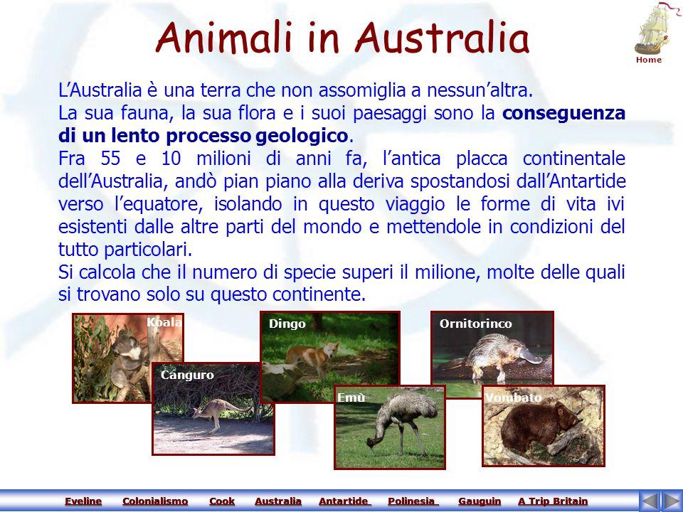 Eveline Colonialismo Cook Australia Antartide Polinesia Gauguin A Trip Britain Eveline Colonialismo Cook Australia Antartide Polinesia Gauguin A Trip BritainEvelineColonialismoCookAustraliaAntartide Polinesia GauguinA Trip BritainEvelineColonialismoCookAustraliaAntartide Polinesia GauguinA Trip Britain Il territorio australiano è costituito da rocce molto antiche e può essere suddiviso in tre grandi regioni.