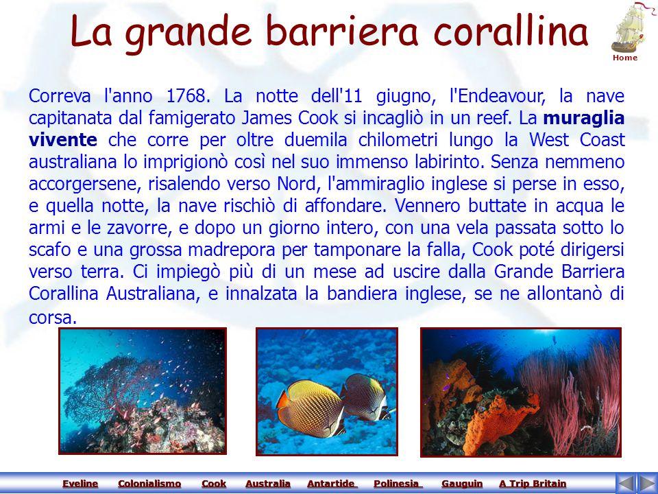 Eveline Colonialismo Cook Australia Antartide Polinesia Gauguin A Trip Britain Eveline Colonialismo Cook Australia Antartide Polinesia Gauguin A Trip BritainEvelineColonialismoCookAustraliaAntartide Polinesia GauguinA Trip BritainEvelineColonialismoCookAustraliaAntartide Polinesia GauguinA Trip Britain Animali in Australia L'Australia è una terra che non assomiglia a nessun'altra.