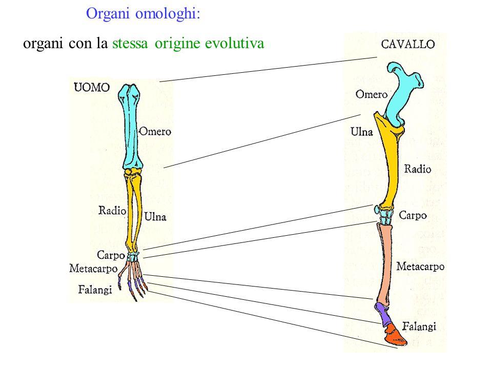 Organi omologhi: organi con la stessa origine evolutiva