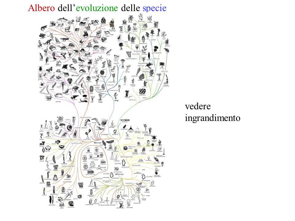 Albero dell'evoluzione delle specie vedere ingrandimento