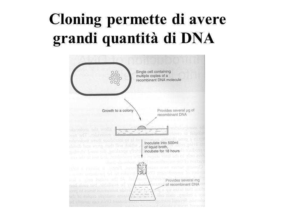 Cloning permette di avere grandi quantità di DNA