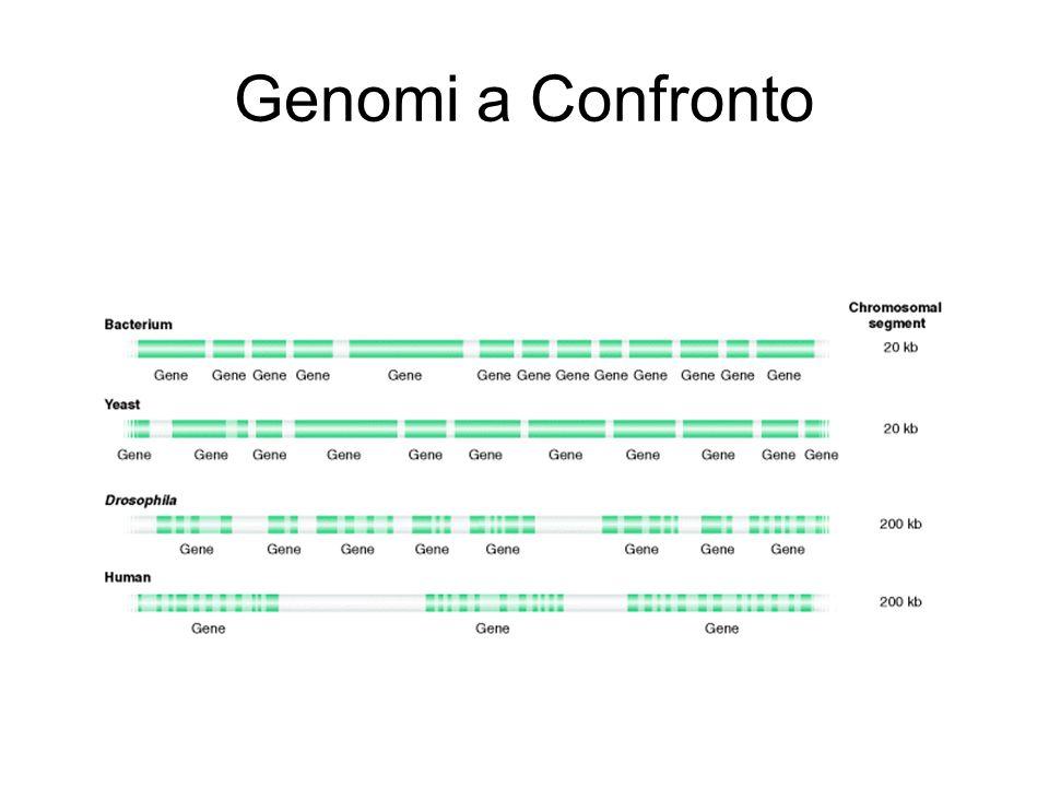 Genomi a Confronto