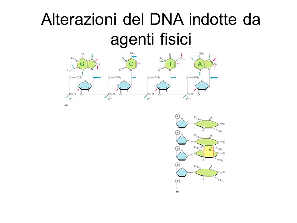 Alterazioni del DNA indotte da agenti fisici