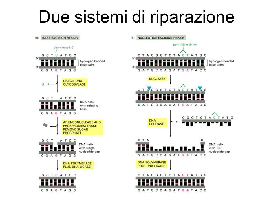 Due sistemi di riparazione
