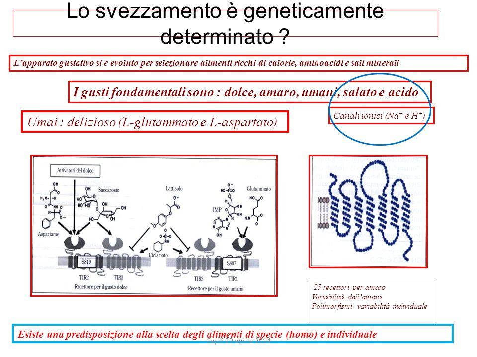 Lo svezzamento è geneticamente determinato .