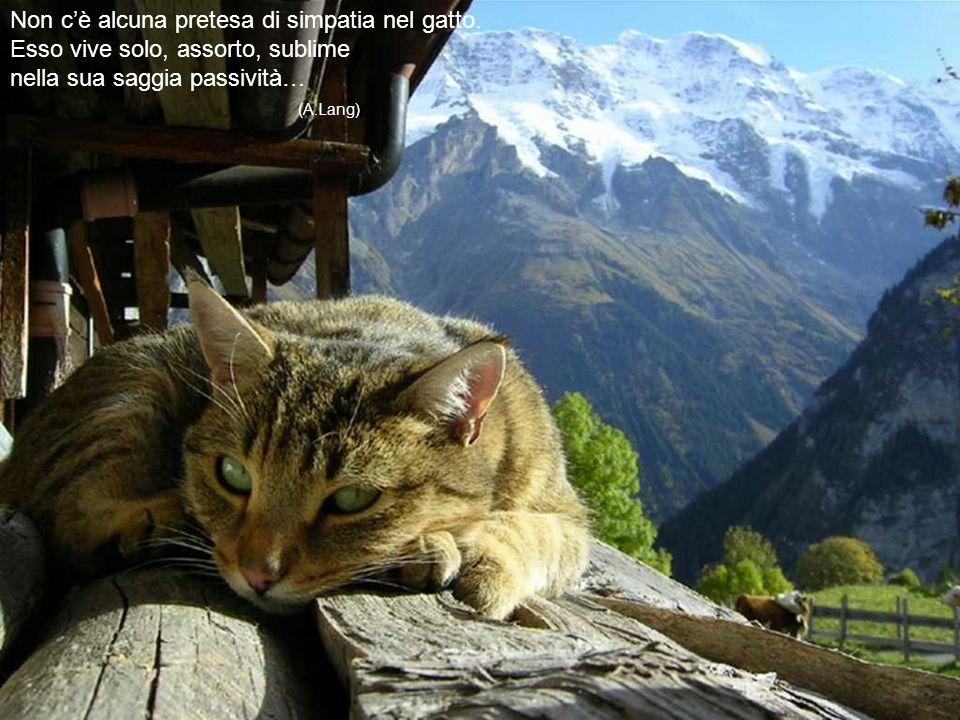 Il gatto è imprevedibile ed ammaliante come un'orchidea selavaggia. (Stanislao Nievo)