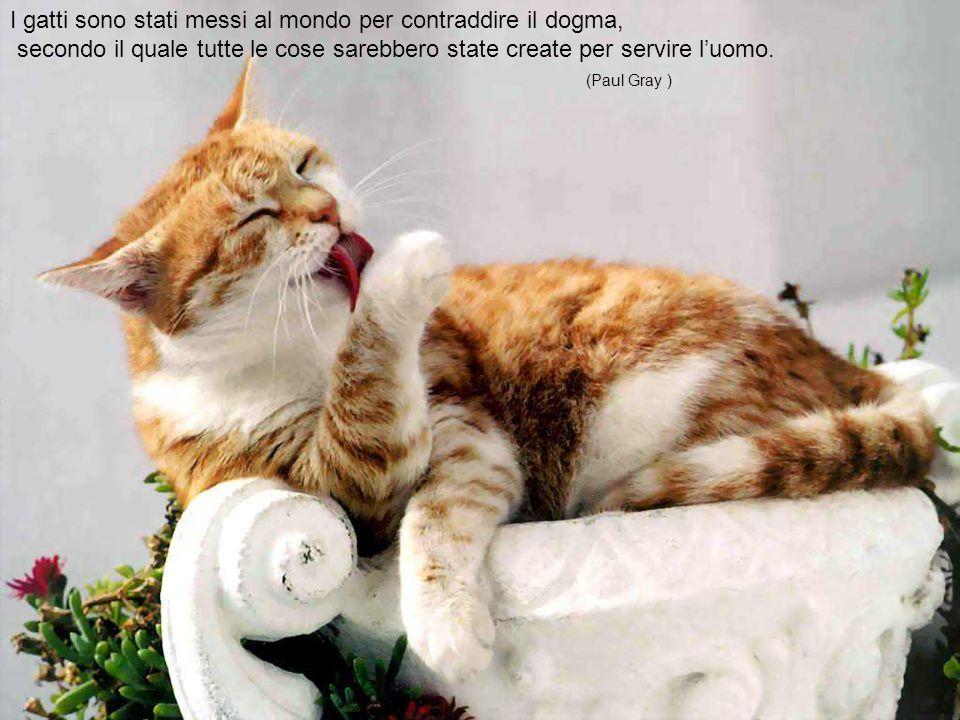 Non c'è alcuna pretesa di simpatia nel gatto.